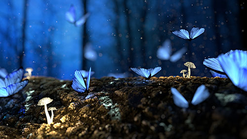 Nighttime image of forest floor with flying insets, mushrooms, and dirt